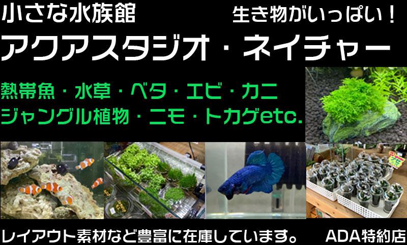 熱帯魚と水草のお店